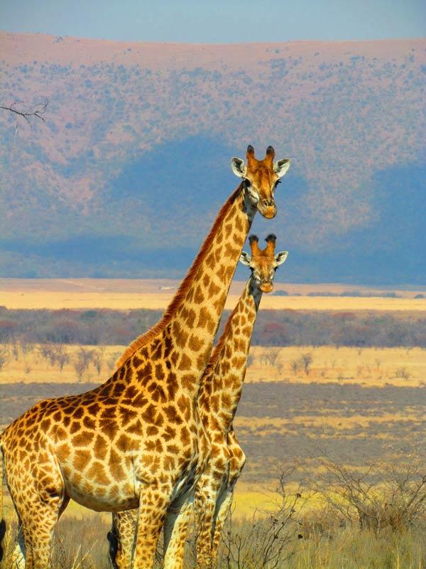 Südafrika-Safari-2